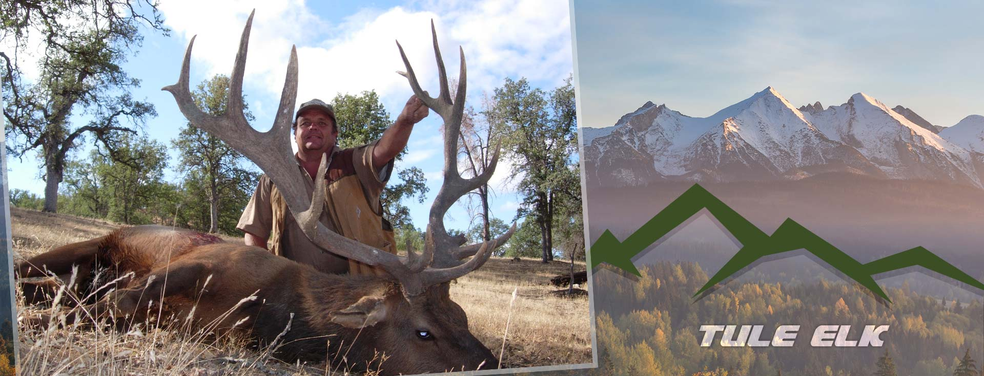 California Tule Elk Hunts