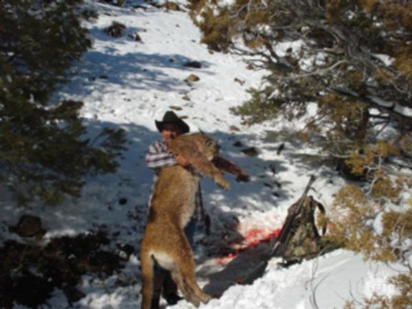 Nevada Mountain Lion Hunting Guide & Outfitter   NV Cougar Hunts
