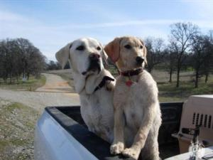 Our Hunting Dog Photos